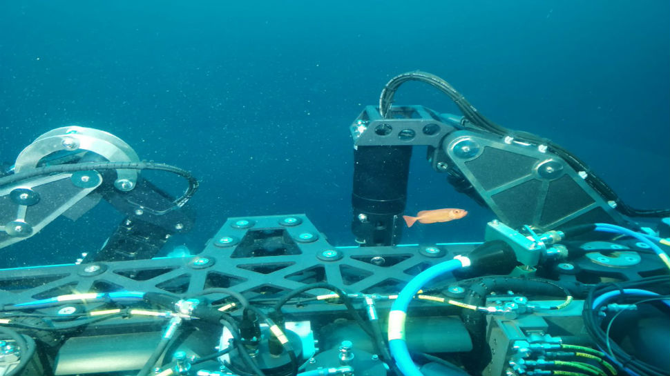 Indian Navy Inducts Deep Submergence Rescue Vessel for Distressed Submarines